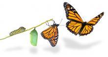 metodologia elos, liderança essencial, essencia individual, excelencia pessoal, transformação organizacional, daniel auguto motta, metodologia bmi